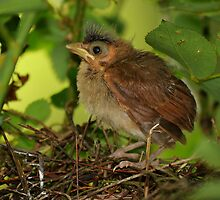 Teensy Leaves the Nest by Bonnie T.  Barry
