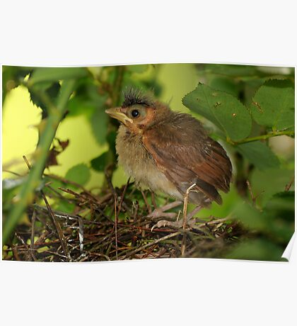 Teensy Leaves the Nest Poster