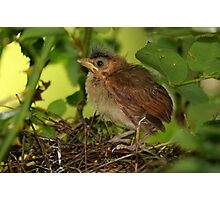 Teensy Leaves the Nest Photographic Print