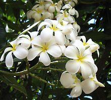 Plumeria Flower by Jessie Leslie