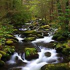 Smoky Mountain Stream, GSMNP by ThomasRBiggs