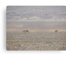 Camels in Jordan Canvas Print