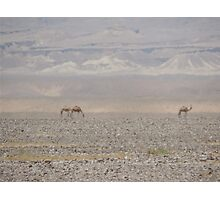 Camels in Jordan Photographic Print