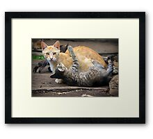 Playtime - Cats and Kittens Framed Print