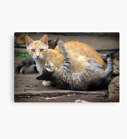 Playtime - Cats and Kittens Canvas Print