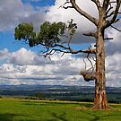 Great farming country, Drouin, Gippsland, Victoria. by johnrf