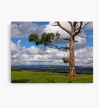 Great farming country, Drouin, Gippsland, Victoria. Canvas Print