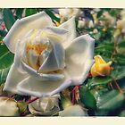 The White Rose by joche