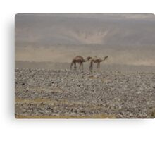 Camels in Jordan 2 Canvas Print