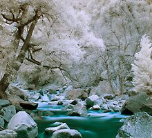 IR H2O by steverobles