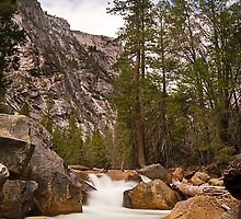 Yosemite Stream by steverobles
