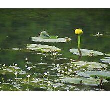 Big lily, little lilies Photographic Print