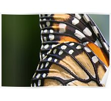 Monarch Wings Poster