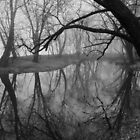 foggy canal by dc witmer