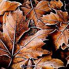 Autumn leaves by alopezc72