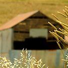 Country Grasses by Joe Mortelliti