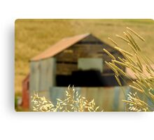 Country Grasses Metal Print