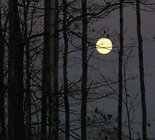 NORTHWOODS MOON by KevinKelly