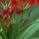Assassin Bug by Dave Martin
