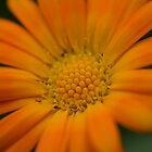 Orange by Bekster