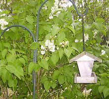 Lilac blossoms and feeder by Thomas Josiah Chappelle