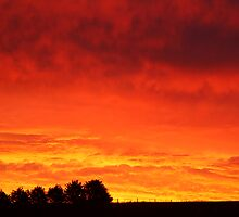 Barrabool Hills Rural Sunset by Joe Mortelliti