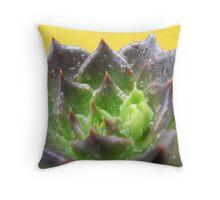 Succulent Colours  Throw Pillow