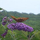 Orange Butterfly on the Butterfly Bush - photo 1 by Jane Neill-Hancock