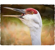 Bird Art - Look Who's Talking Photographic Print