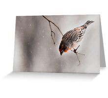 House Finch on a Branch Greeting Card