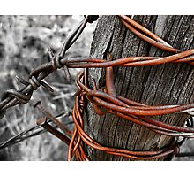 Rusty Barbs Photographic Print