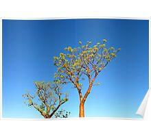 Boab Tree, Western Australia Poster