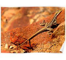 Lizard, Western Australia Poster