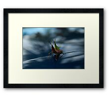 The Hitchhiker Framed Print