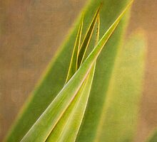 Sharp aloe, soft aloe by Celeste Mookherjee