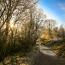 Penllergare Woods by Pippa Carvell