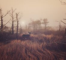 Deer On A Foggy Morning by Sharon Norman