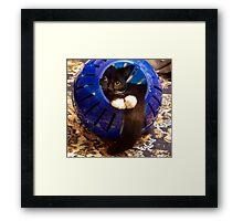 Kitty Ball Framed Print