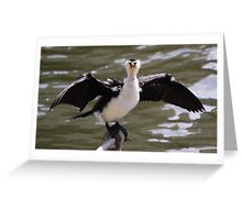 Shag on the banks of the Yarra Greeting Card
