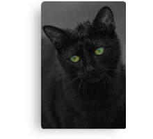 Cats Eyes - Cat Loves Water Canvas Print