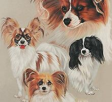 Papillon by BarbBarcikKeith