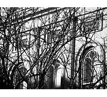 Arches and Branches, Charleston, SC Photographic Print