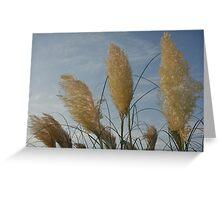 Pampas Grass Flowers Greeting Card