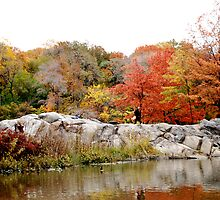 Central Park - Autumn by jookboy