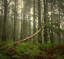 Fallen Pine by George Petrovsky