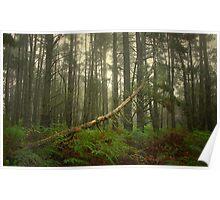 Fallen Pine Poster