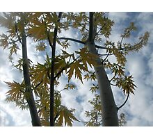 Tree from Below Photographic Print