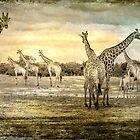 African Animals Textured by WantedImages