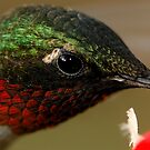 Lil' Tiny Feathers by Dennis Jones - CameraView
