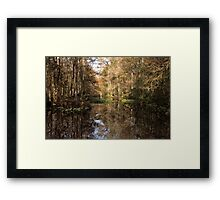 Beauty in the Swamp Framed Print